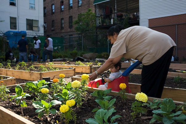 gardening in the South Bronx
